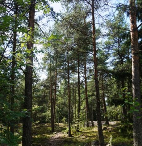 metsä_